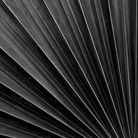 NATURE LINES by Monish Kumar - Nature Up Close Other plants