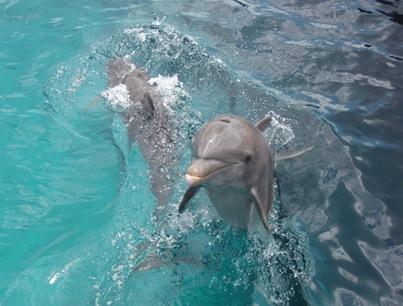Dois golfinhos a seguir-nos enquanto nos afastavamos depois de nadarmos com eles...