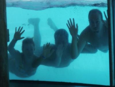 Viver num aquário deve ser lixado...