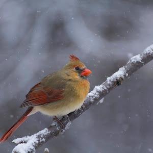 2014-1-5 Birds 020.jpg