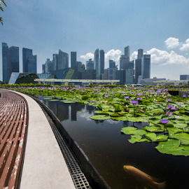 SINGAPORE IN SEPTEMBER by Frank Photography - City,  Street & Park  Skylines ( waterlily, sky, fish, lake, marina, singapore, september )