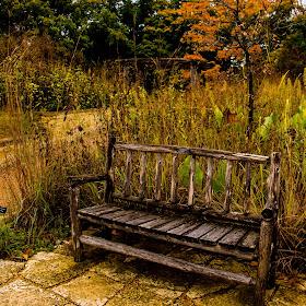 bench in the falls.jpg
