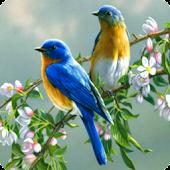 Singing Birds Live Wallapaper