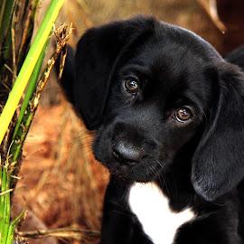 Thyme - Dog Rescue Newcastle by Jenefer Zeitsch - Animals - Dogs Puppies