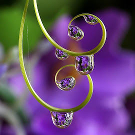 by Wahyudi Barasila - Nature Up Close Natural Waterdrops