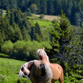 by Ralitsa Docheva - Animals Horses