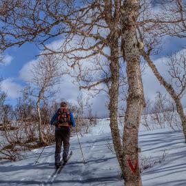 by Per Alnes - Sports & Fitness Snow Sports