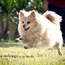 Sebastian  by Grace Duran - Animals - Dogs Running