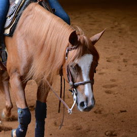 Relaxing ride by Brian Shoemaker - Novices Only Pets ( mare, reining, horse, western, relaxing )