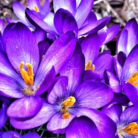 Full bloom by Christa Miller - Instagram & Mobile iPhone