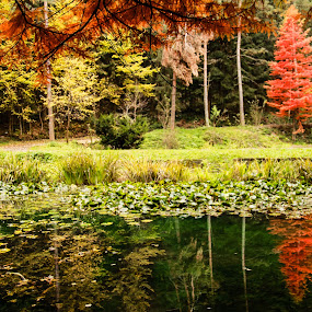 Spring lilly lake by Camelia Cami - Landscapes Waterscapes ( autumn, trees, lake, spring, lilly,  )