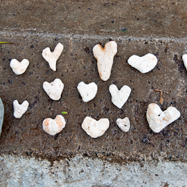by Keith Sutherland - Artistic Objects Still Life ( coral, hearts, rock, ocean, beach, shapes )