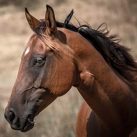 Beauty by Esther Visser - Animals Horses ( #portrait, #country, #horse, #animal, #nag,  )