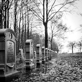 Houthulst by Arti Fakts - City,  Street & Park  Cemeteries ( tombstones, cementery, trees, rain, graveyard )