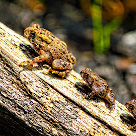 Family... by Bob Passmore - Animals Amphibians (  )