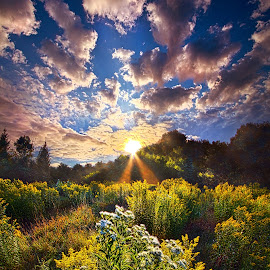 Daybreak by Phil Koch - Landscapes Prairies, Meadows & Fields ( vertical, photograph, farmland, yellow, leaves, photooftheday, wicounties, love, sky, tree, nature, autumn, bestoftheday, weather, flower, instagood, follow, orange, twilight, agriculture, horizon, portrait, environment, dawn, serene, trees, floral, inspirational, natural light, wisconsin, ray, landscape, phil koch, spring, sun, photography, farm, vines, horizons, inspired, clouds, office, park, green, scenic, morning, shadows, wild flowers, field, picoftheday, red, fog, blue, sunset, peace, fall, meadow, summer, landscapephotography, beam, earth, sunrise, landscapes, mist )