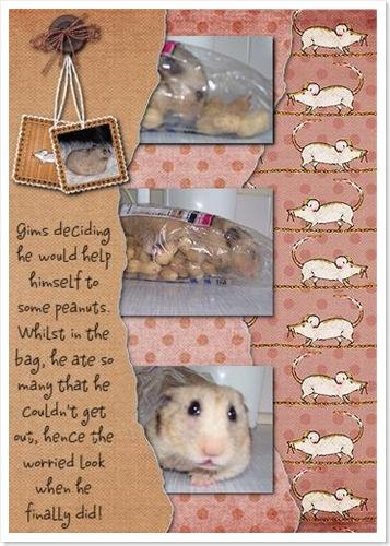 su-hamster