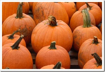 pumpkin day 007