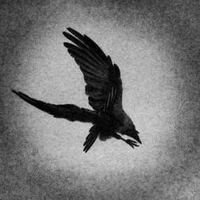 by Shiful Riyadh - Black & White Abstract ( bird, black and white, crow, abstract photography,  )