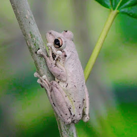Resting in a tree by Kathy Bahrs- Daniels - Animals Reptiles