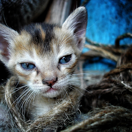 Cat... by Arnab Basu - Animals - Cats Kittens (  )