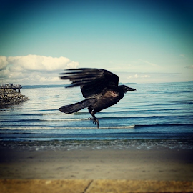 by Todd Reynolds - Instagram & Mobile Android ( crow )