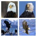 Bald Eagles Live Wallpaper icon