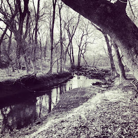 Resting stream by Lisa Delia - Landscapes Forests ( cemetery, snap, bnw, black, white, vsco, beauty, dreamers, vintage, haunted, stories, letitbe, nyc, ig_bnw, ig_nyc, black and white, b&w, landscape,  )