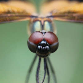 EYES by Kawsar Mostafa - Animals Insects & Spiders