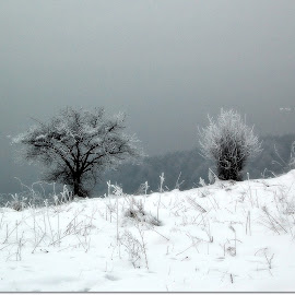 by Vesna Djordjevic - Landscapes Weather