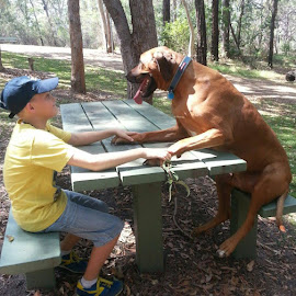 My two boys  by Phil Qld - Animals - Dogs Playing