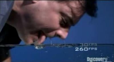 【動画】犬の水の飲み方をスローモーションで見る。