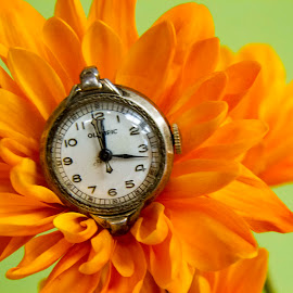 Emerging Watch by Darleen Stry - Artistic Objects Jewelry ( orange, macro, time, watch, passes, flower )