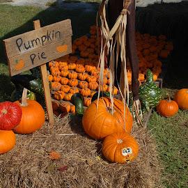 Pumpkin Pie by Philip Molyneux - Food & Drink Fruits & Vegetables ( fall, pumpkins, vegetables )