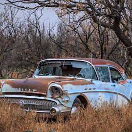 Old Buick by Ross Brown - Transportation Automobiles ( old, cars, buick, abandon, decay,  )