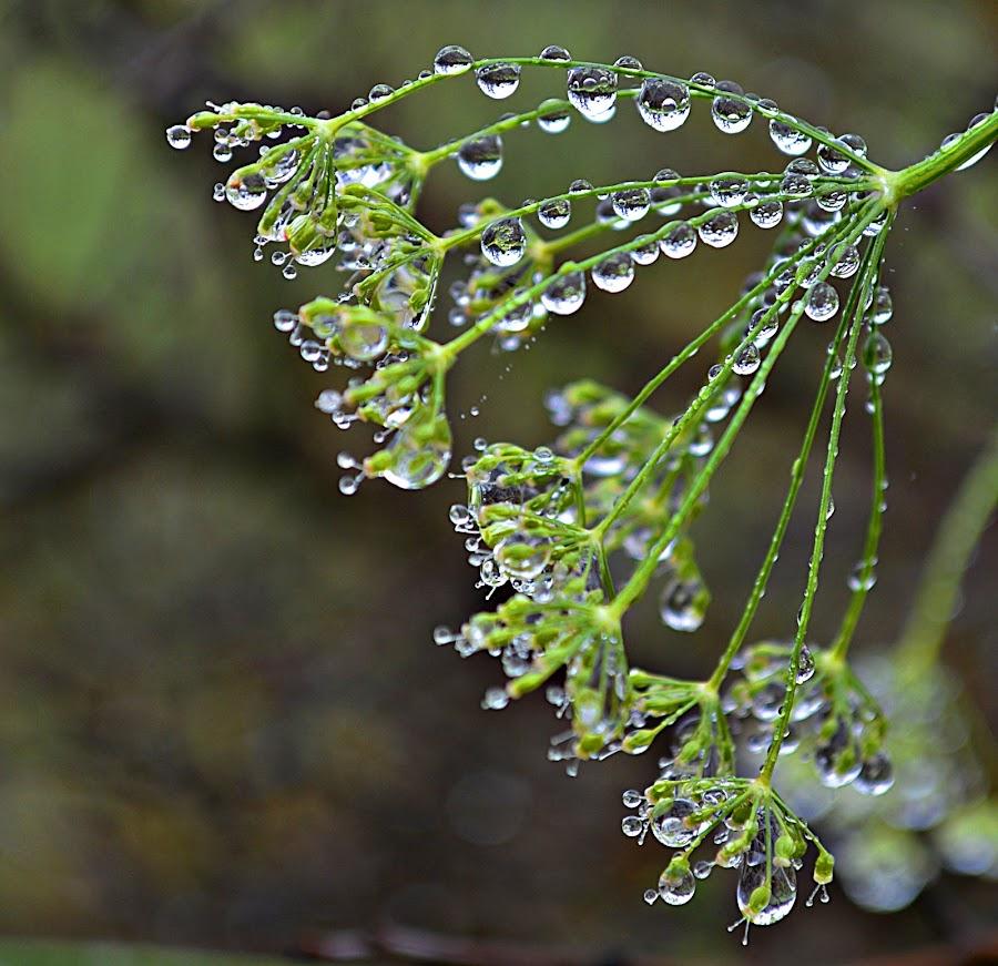 Zeleno by Jelena Puškarić - Nature Up Close Natural Waterdrops (  )