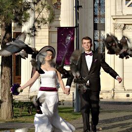 Love birds by Nicu Buculei - Wedding Bride & Groom ( pigeons, wedding, couple, bride, groom )