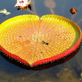 YELLOW  HEART by Tina Banik - Nature Up Close Other Natural Objects (  )