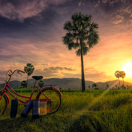 Palm trees by Ravuth Um - Transportation Bicycles ( field, bike, palmtrees, sunset, landscape )