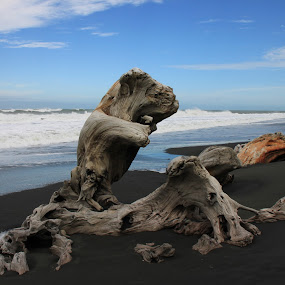 Driftwood by Kirsten Gamby - Landscapes Waterscapes ( patea beach, driftwood, natural sculpture, natural objects, seascape,  )