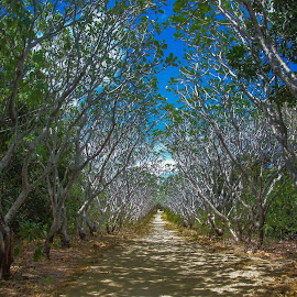 Mystery footpath   by Nick Foster - Nature Up Close Trees & Bushes ( sand, shells, boats, environement, lighthouse, sea, fisherman, island )