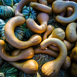 Crooknecks by Patrick Flood - Food & Drink Fruits & Vegetables ( canon, photosbyflood, pumpkin patch, yucaipa, 10 freeway, california, crooknecks, squash, harvest festival )
