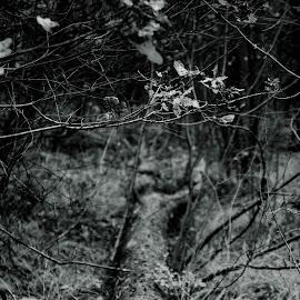 Tree by Wojciech Cricetulus Migratorius - Nature Up Close Trees & Bushes
