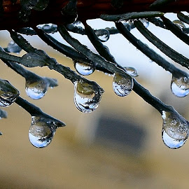 Water droplets. by Denton Thaves - Nature Up Close Water ( dewdrops )