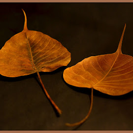 Aging Gracefully by Prasanta Das - Nature Up Close Leaves & Grasses ( dry, leaves, graceful, aging )