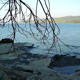 Branches by Bozica Trnka - Landscapes Beaches ( sea, vrboska, beach, hvar, branches, adriatic coast )