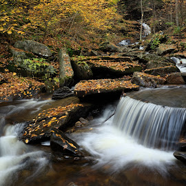Autumn in Glen Leigh by Tim Devine - Nature Up Close Water ( falls trail, autumn, kitchen creek, glen leigh, pennsylvania, ricketts glen state park )