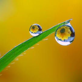 Like the sun by Citra Hernadi - Nature Up Close Natural Waterdrops