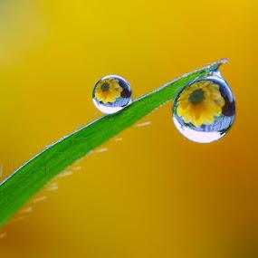 Like the sun by Citra Hernadi - Nature Up Close Natural Waterdrops