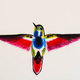 by Valerie Yelk - Drawing All Drawing ( bird, animals, color, artistic, drawning )